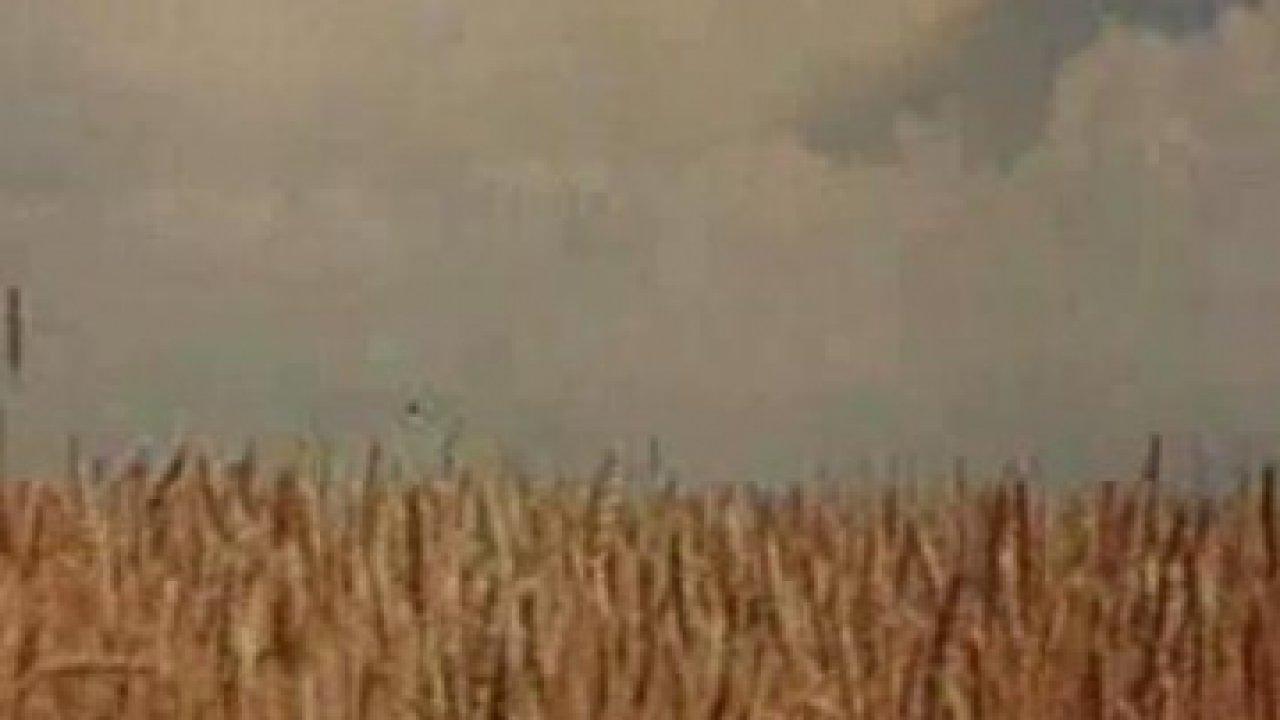 Русское поле - Мелодрама, Фильм