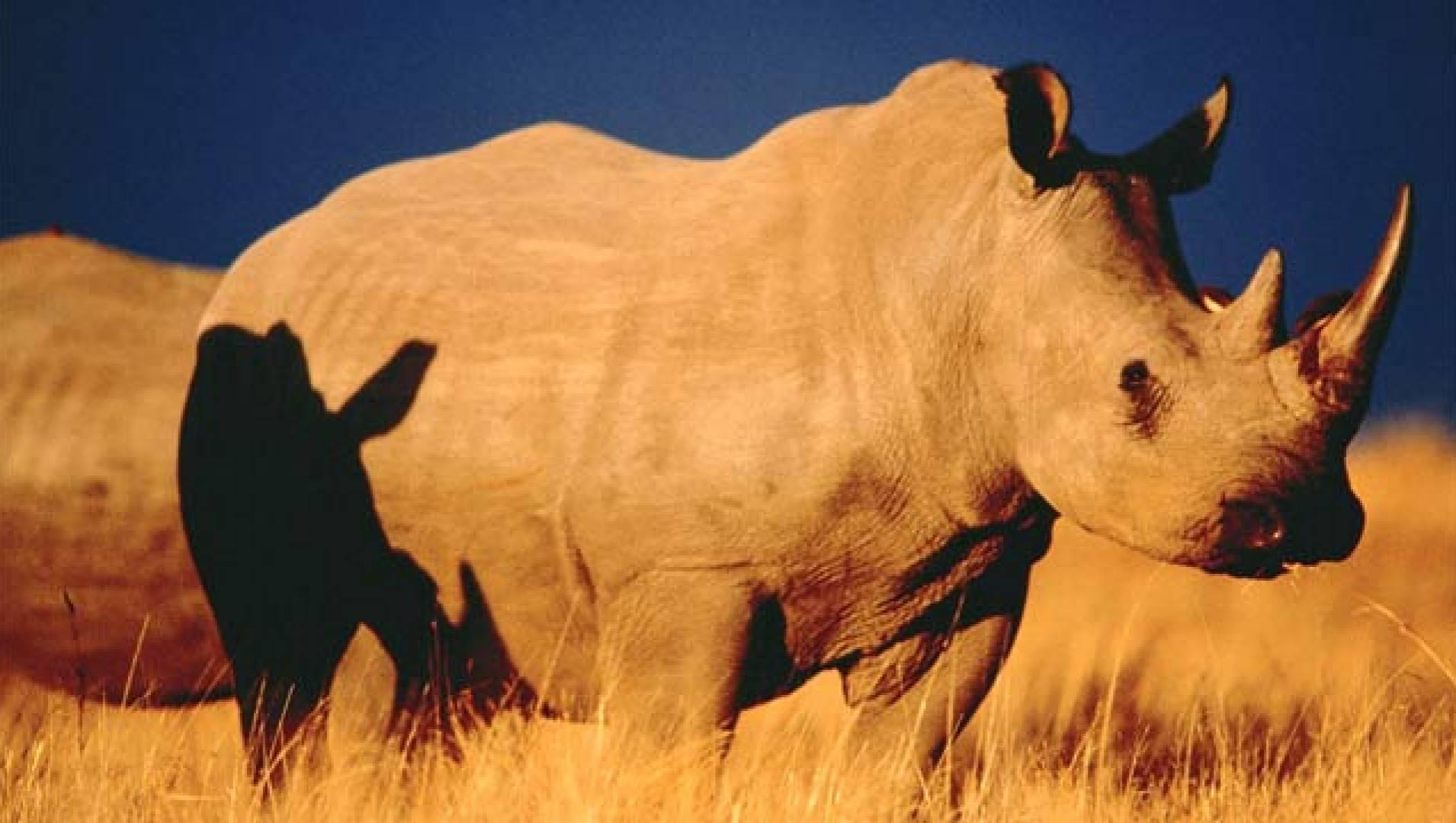 Носороги атакуют - Документальный фильм
