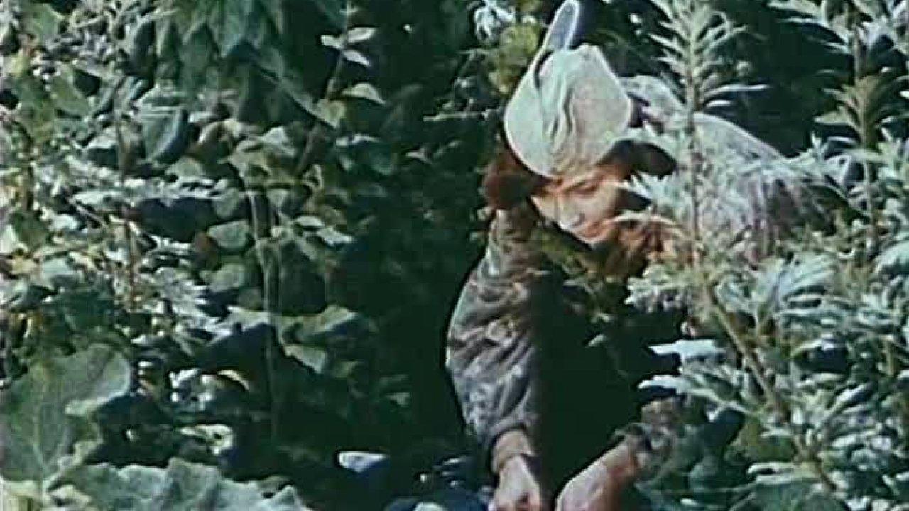 В двух шагах от «Рая» - Приключения, Военный, Фильм
