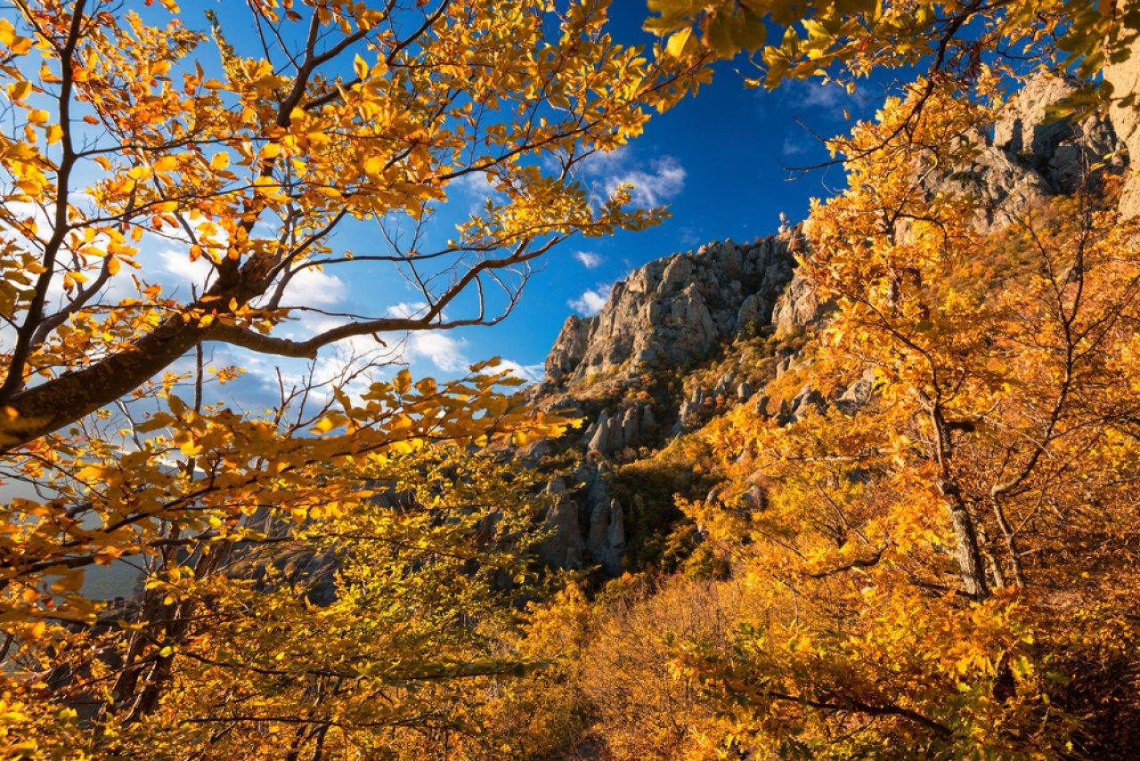Фото: Vlad Sokolovsky / Shutterstock