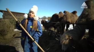 «Стажёрка»: приключения на ферме