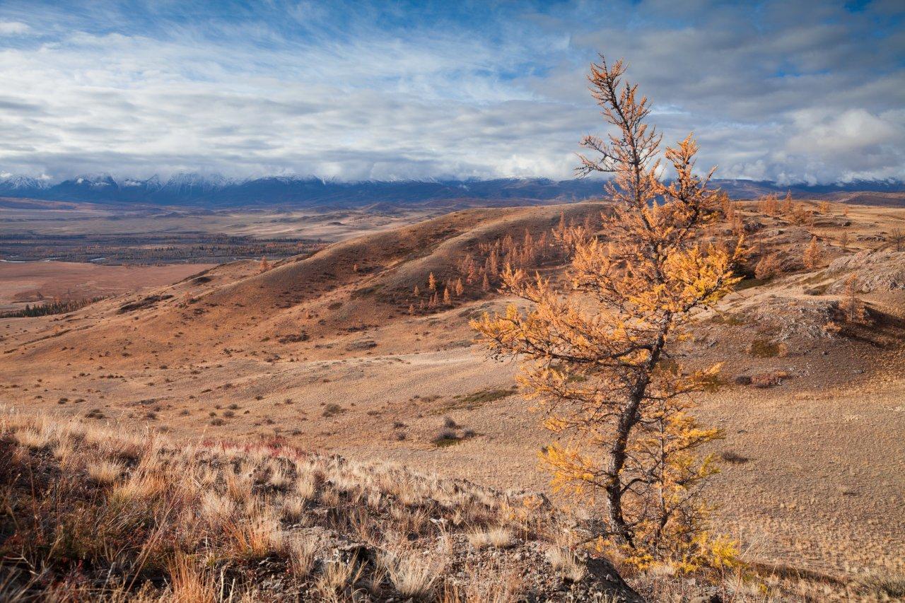 Курайская степь на Алтае. Фото: Tatiana Rychakova / Shutterstock